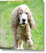 Dog On The Green Field Metal Print by Mats Silvan