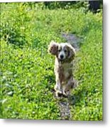 Dog Running In The Green Field Metal Print