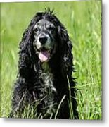 Dog Sitting On The Green Grass Metal Print