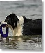 Dog To The Rescue Metal Print