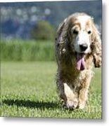 Dog Walking On The Green Grass Metal Print