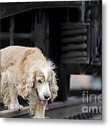 Dog Walking Under A Train Wagon Metal Print