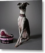 Dog With Diva Bowl Metal Print by Chris Amaral