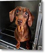 Dog With Eyes Metal Print