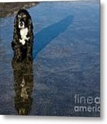 Dog With Reflections And Shadow Metal Print