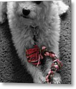 Dog With Tug Toy Soft Focus Metal Print