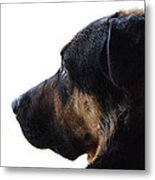 Doggie Daydreams Metal Print