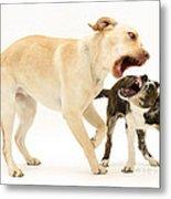 Dogs Playing Metal Print