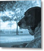 Dog's Point Of View Metal Print