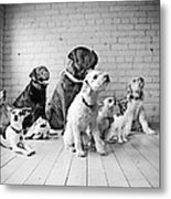 Dogs Watching At A Spot Metal Print