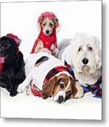 Dogs Wearing Winter Accessories Metal Print