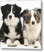 Dogs With Different-colored Eyes Metal Print
