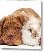 Dogue De Bordeaux Puppy With Bunny Metal Print