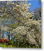 Dogwood Grove Metal Print by Debra and Dave Vanderlaan