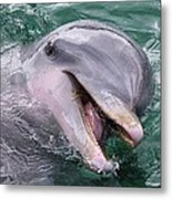 Dolphin With His Fish Metal Print
