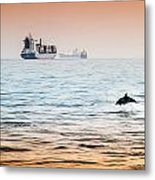 Dolphing Playing In The Sunset Metal Print