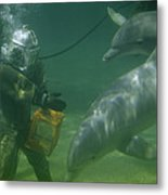 Dolphins Hover Near A Diver Holding An Metal Print by Luis Marden