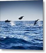 Dolphins Playing In The Ocean Metal Print