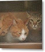 Domestic Cat Metal Print