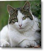 Domestic Cat Felis Catus Portrait Metal Print