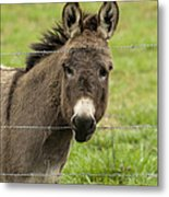 Donkey - The Beast Of Burden Metal Print