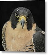 Don't Flinch... I Am Looking At You Metal Print
