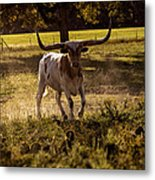 Don't Mess With Texas ..... Long Horns That Is  Metal Print