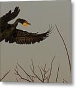 Double Crested Cormorant Coming Metal Print