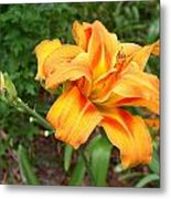 Double Old Fashion Day Lily Metal Print