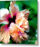 Double Peach Hibiscus Five Metal Print
