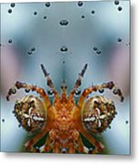 Double Spider Metal Print