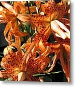 Double Tiger Lily Named Flora Pleno Metal Print