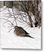 Dove In The Snow Metal Print