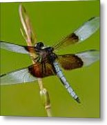 Dragon Fly Green Metal Print