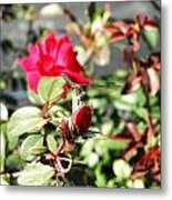 Dragon Fly Rose Bud  Metal Print
