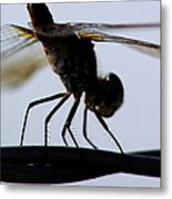 Dragon On The Wire Metal Print
