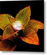 Dragon Plant Patronus Metal Print by Michael Taggart