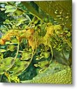 Dragon Seahorse Metal Print