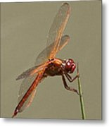 Dragonfly - Dodger Metal Print
