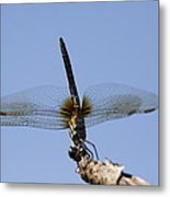 Dragonfly - Handstand Metal Print