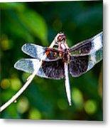 Dragonfly 0002 Metal Print
