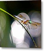 Dragonfly Dance Metal Print
