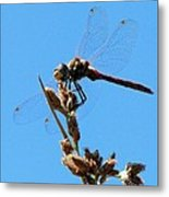 Dragonfly Dreams Metal Print