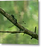 Dragonfly Hanky Panky Metal Print