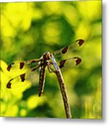 Dragonfly In Green Metal Print