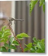 Dragonfly In Nature Metal Print