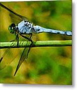 Dragonfly Metal Print by Jack Zulli