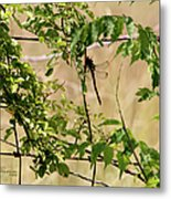 Dragonfly Lunch Metal Print