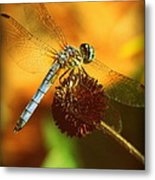 Dragonfly On A Dried Up Flower Metal Print
