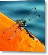 Dragonfly On A Paddle Metal Print